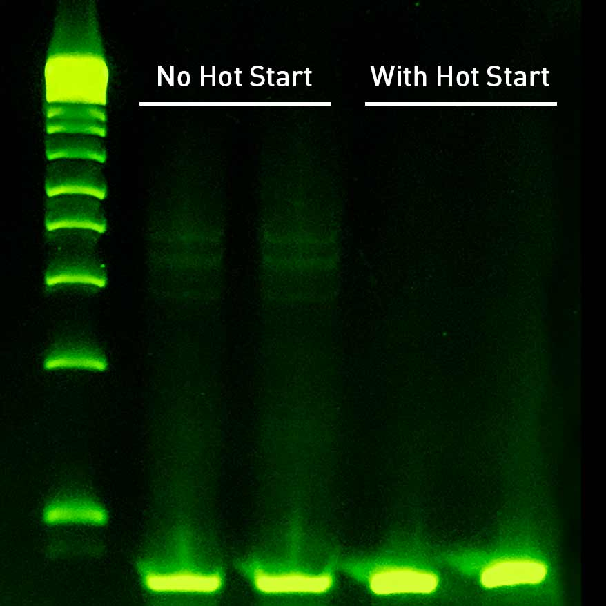 Sahara Hot Start's aptamer successfully prevents amplification of non-specific bands